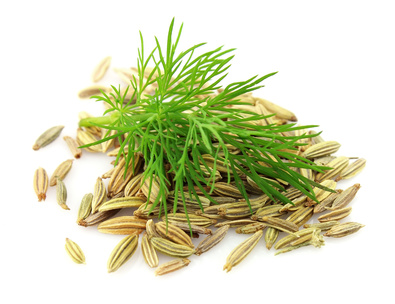 Seeds and a fennel branch