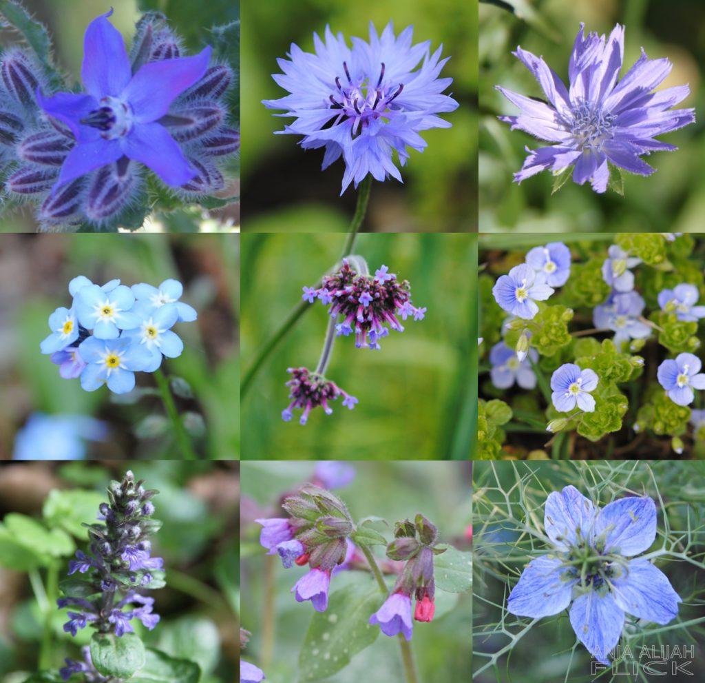 Geheimnisvolle Blaue-Blüten-Tinktur