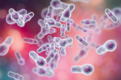 Trehalose: Künstlicher Zucker fördert Clostridium-difficile-Infektionen!
