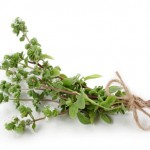 Marjoram isolated on white background