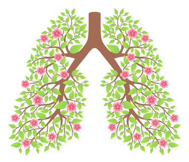 lungs healthy