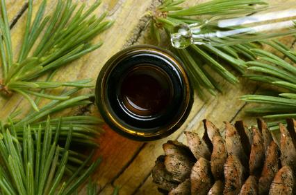 Heilrezept: Fichtenharzsalbe (Pechsalbe)