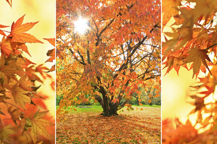 Triple - Herbstfarben