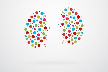 Human Kidneys Abstract Vector