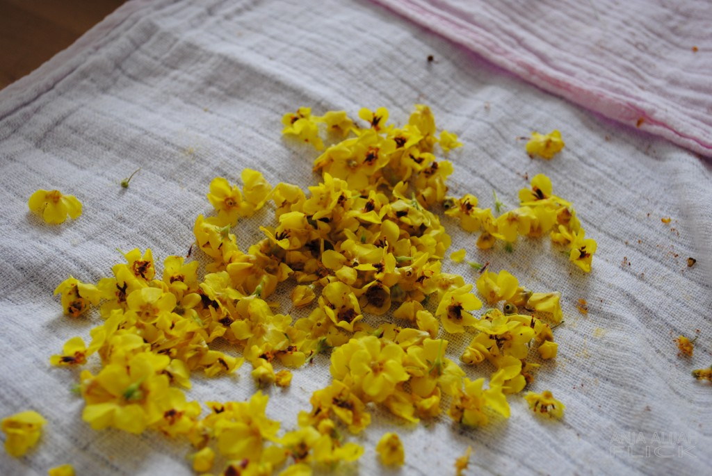 Königskerze Blüten getrocknet NEU WASSERZEICHEN DSC_0068