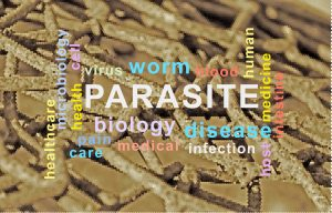 Darmparasiten: Schon im antiken Grichenland eine Plage